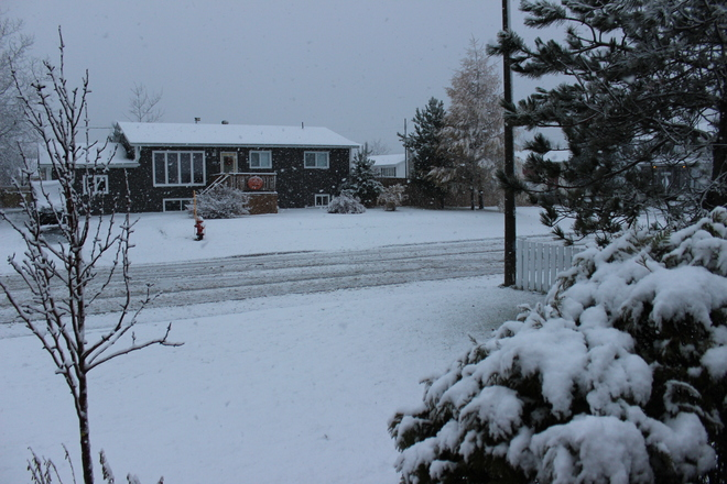 Snowy day in Gander, NL Gander, Newfoundland and Labrador Canada