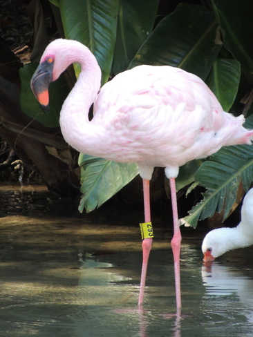 Pink Flamingo Orlando, Florida United States