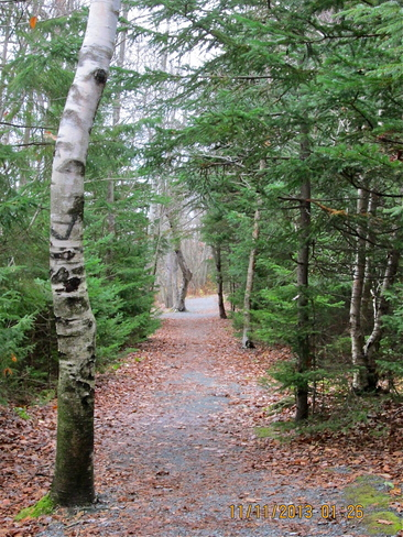 Woodland trail Dartmouth, Nova Scotia Canada