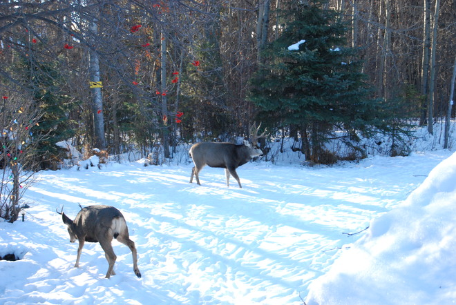 morning visitors Red Deer, Alberta Canada