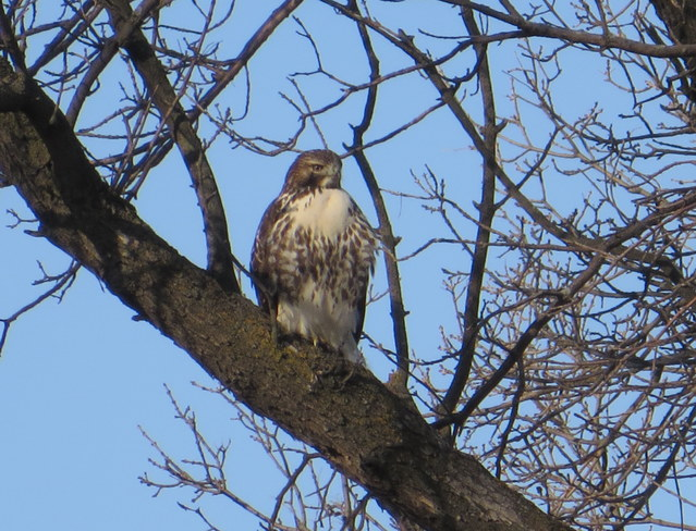 The Hawk Brandon, Manitoba Canada