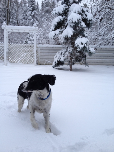 Dex in the snow Kenora, Ontario Canada