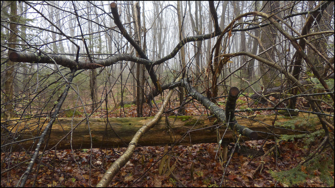 Sheriff Creek red trail wet branches. Elliot Lake, Ontario Canada