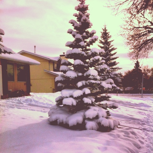 so pretty St. Albert, Alberta Canada