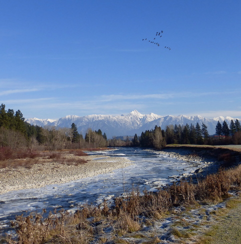GEESE OVER THE ROCKIES Cranbrook, British Columbia Canada