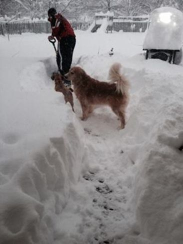 Diggin' a path for the puppies... London, Ontario Canada