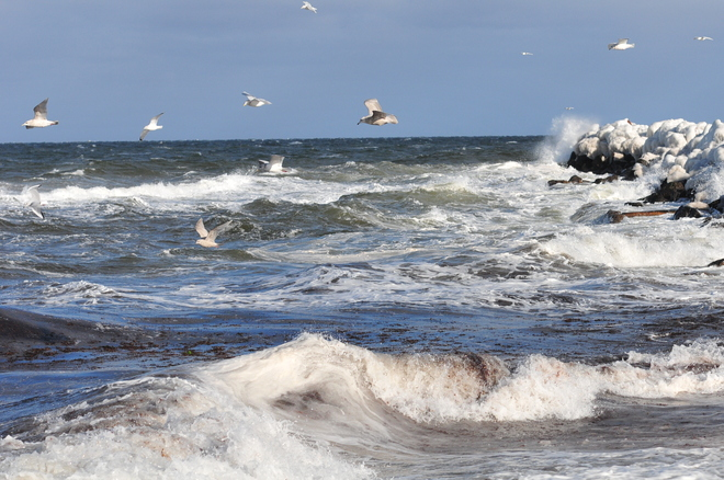 The seagulls are having a great time. Cap-Pele, New Brunswick Canada
