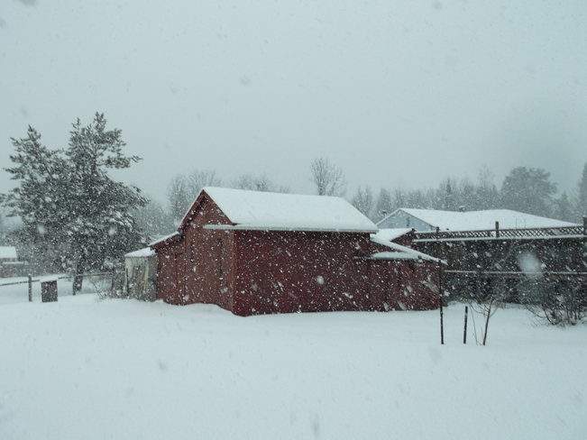 Snowing In Massey Massey, Ontario Canada