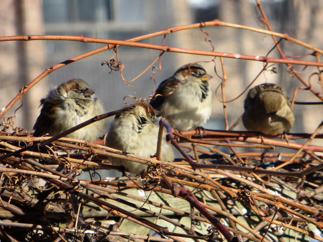 Waiting in line for the bird feeder LaSalle, Quebec Canada