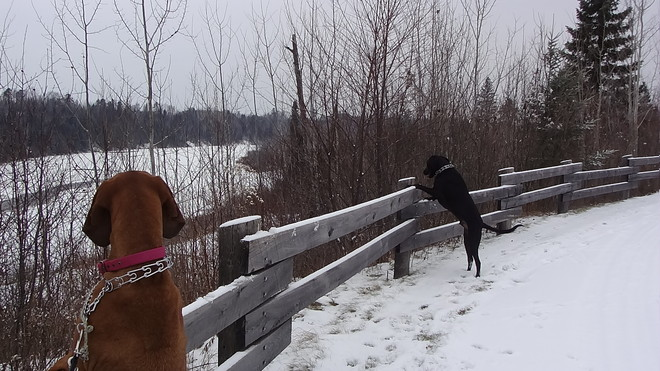 Checking out the river below Thunder Bay, Ontario Canada
