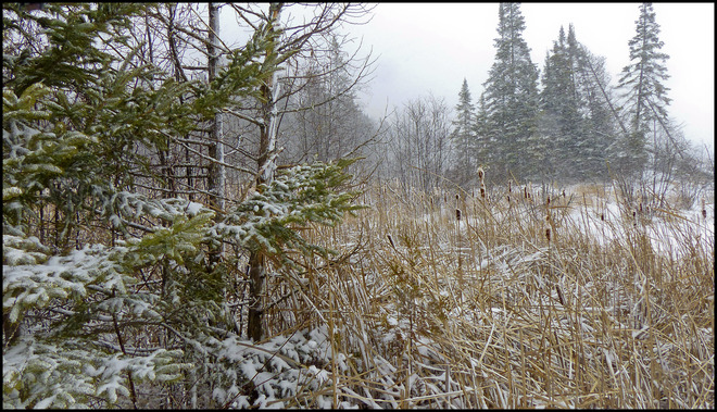 Sheriff Creek let it snow. Elliot Lake, Ontario Canada