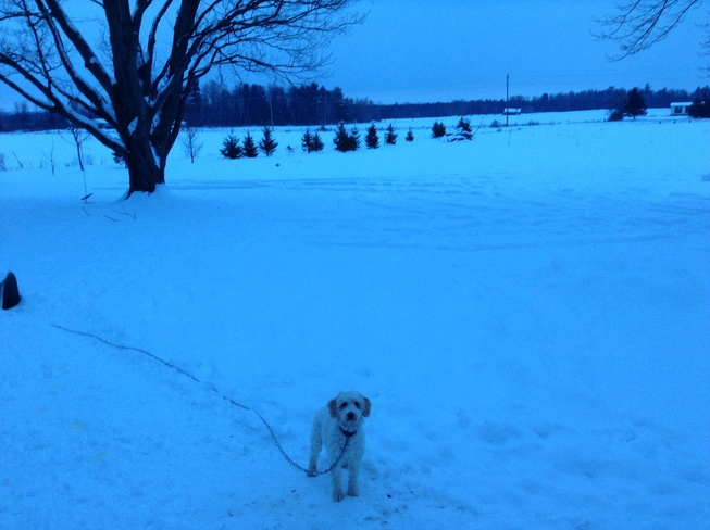My Snow Pup Woodlawn, Ontario Canada