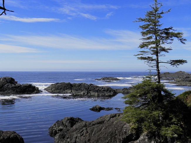 Pacific Crest Trail Ucluelet, British Columbia Canada