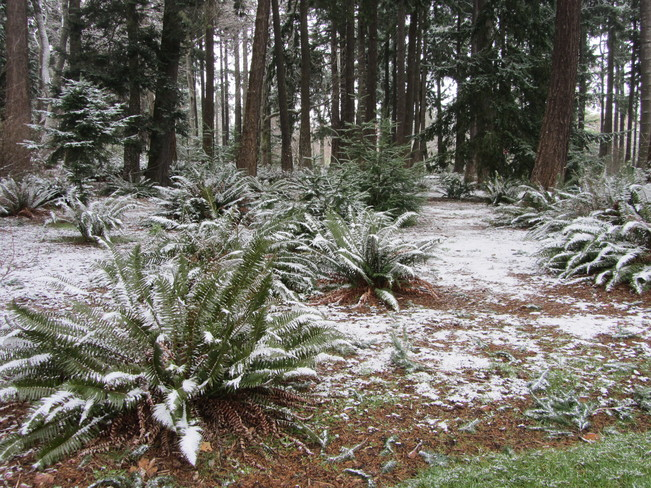 A Dusting of Snow in the Park