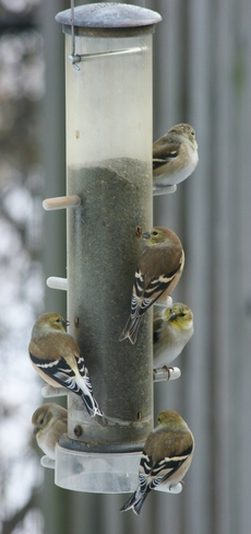 Goldfinch highrise Nepean, Ontario Canada