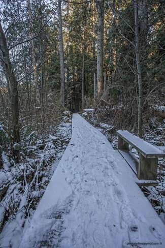 Snow on Boardwalk Metchosin, British Columbia Canada