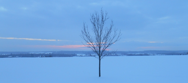One tree stands alone Plantagenet, Ontario Canada