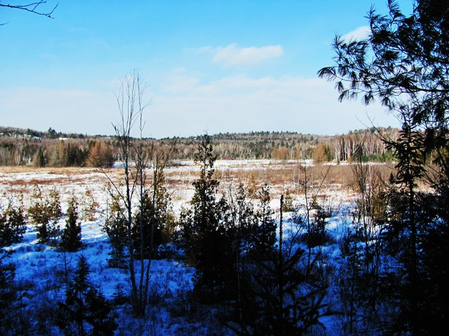 A Walk in the Bush Elliot Lake, Ontario Canada
