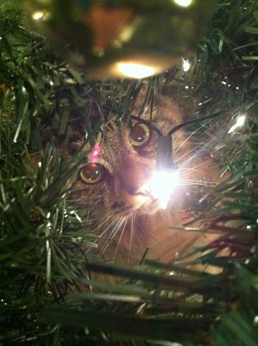 Kitty in the Christmas Tree Bedford, Nova Scotia Canada