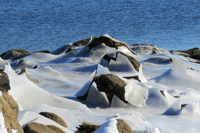 Rocks Peeking Through An Ice Blanket Chester, Nova Scotia Canada