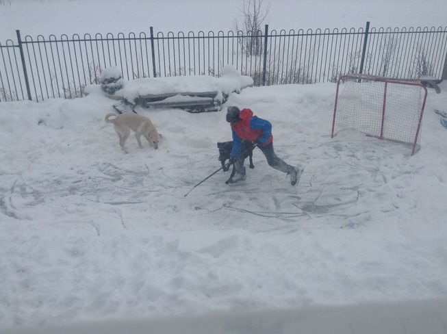 Hockey with dogs during snowfall Oakville, Ontario Canada