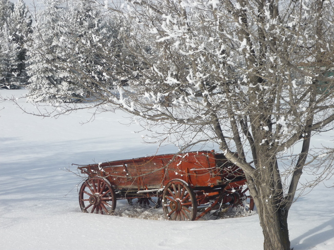 Red Wagon in the Snow Spruce Grove, Alberta Canada