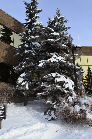 My Office Tree Calgary, Alberta Canada