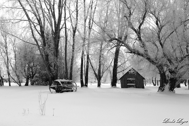 A White Winter Setting Oakbank, Manitoba Canada