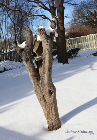Backyard Birdhouse Cambridge, Ontario Canada
