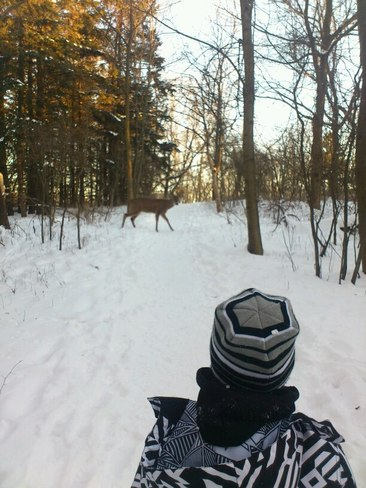 "Our ""Deer"" friends Hamilton, Ontario Canada"