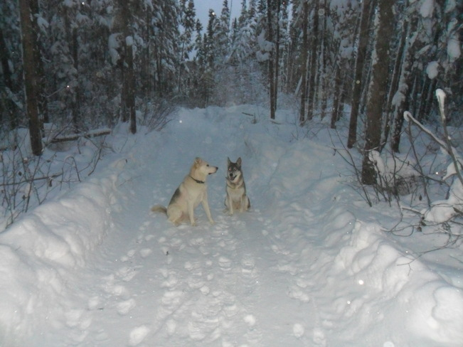 walking the dogs Thompson, Manitoba Canada