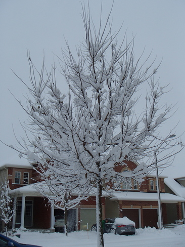 snow + tree = beauty Nepean, Ontario Canada
