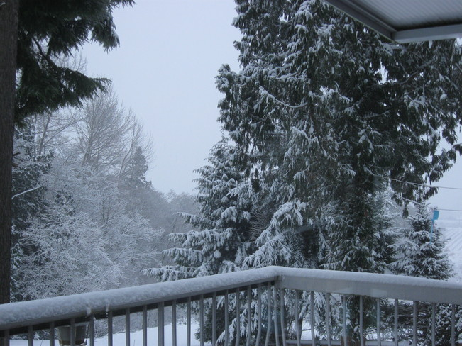 our winter wonderland Surrey, British Columbia Canada