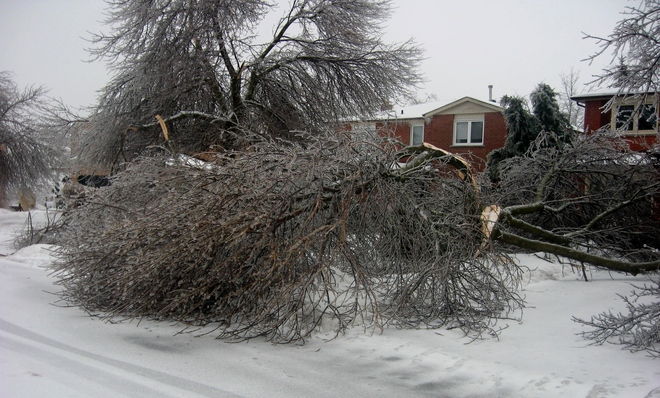 Tree Damage Bolton, Ontario Canada