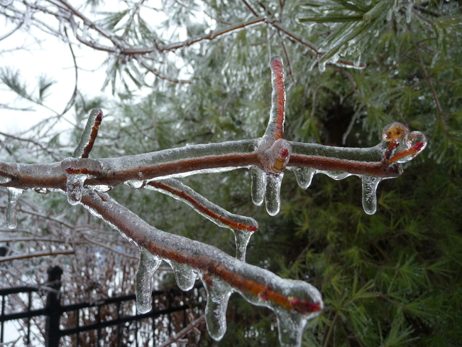Beauty in the Ice Storm Mississauga, Ontario Canada