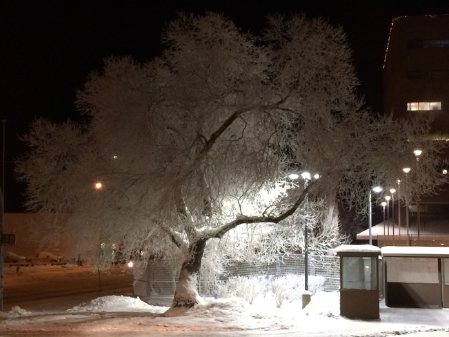 A frosty tree Fort McMurray, Alberta Canada