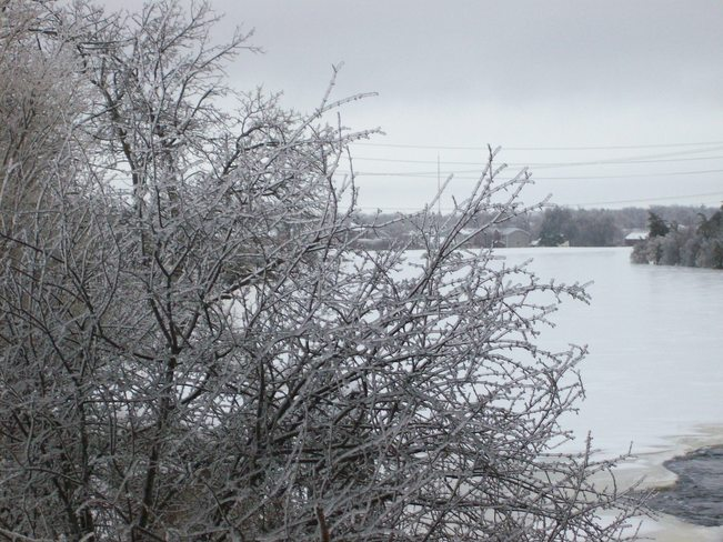 The continuous Icestorm as seen on Saturday afternoon the 21st Belleville, Ontario Canada