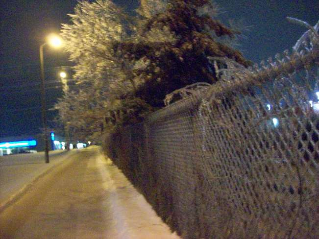 Ice Covered Tree and fence on saturday night the 21st Belleville, Ontario Canada