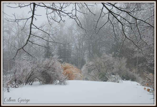Ice Storm on the North Mountain Centreville, Nova Scotia Canada