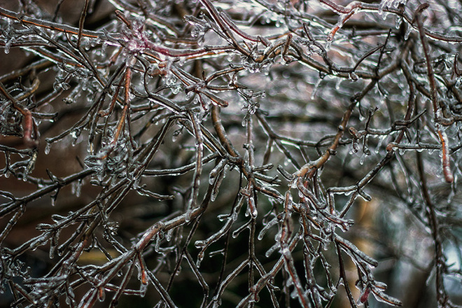 Branches During Ice Storm1 Toronto, Ontario Canada