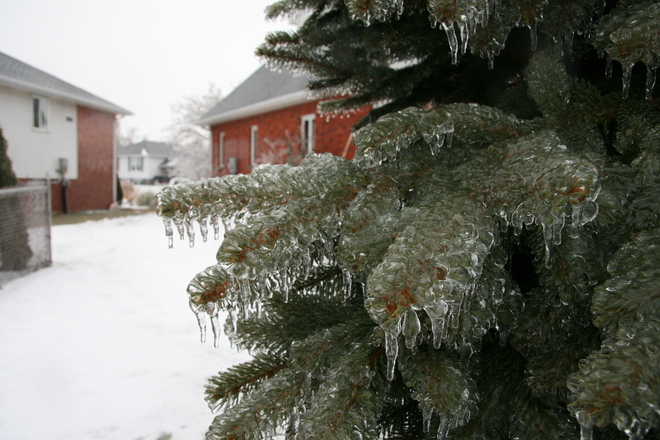 Icy Evergreen Brantford, Ontario Canada