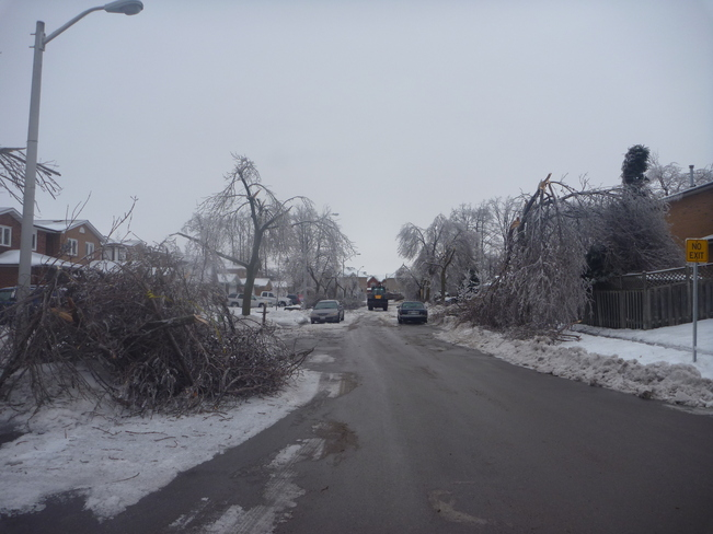 All mature trees downed! Brampton, Ontario Canada