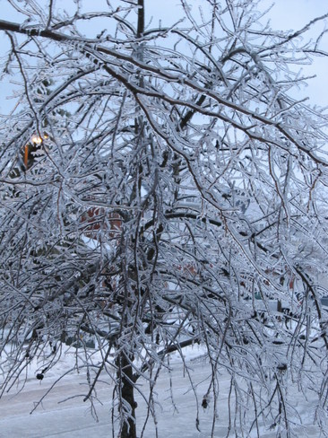 Tree in Ice Whitby, Ontario Canada