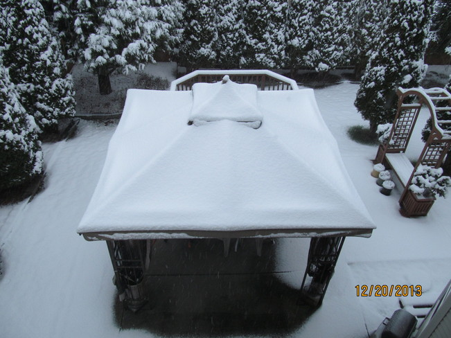New snow in back yard Cloverdale, British Columbia Canada