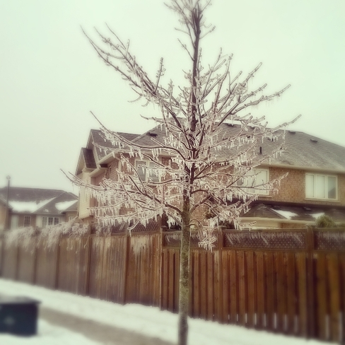 Ice Storm Burlington, Ontario Canada