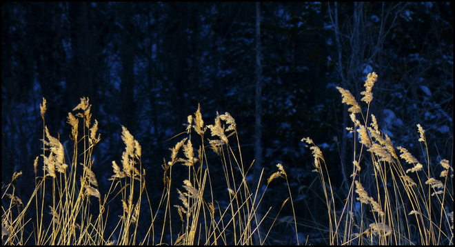 Sheriff Creek, cold day, golden grasses.. Elliot Lake, Ontario Canada