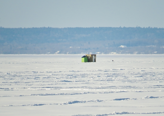 Ice fishing huts moving on to Lake Nipissing. North Bay, Ontario Canada