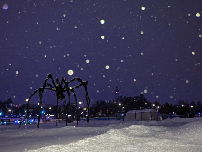 spiders in town:) Ottawa, Ontario Canada