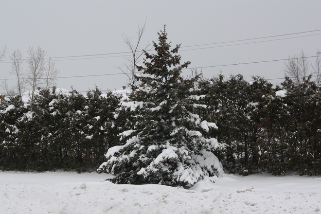 Snow again! Aylmer, Quebec Canada