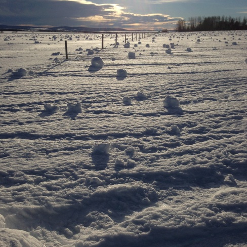 Christmas Day Snow Rollers Dawson Creek, British Columbia Canada